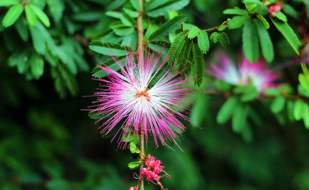 Fancy pink flower