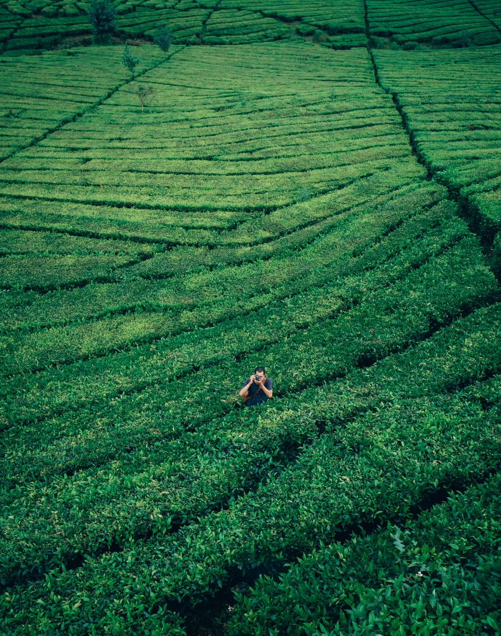 aerial photography of man in middle of plant field holding camera