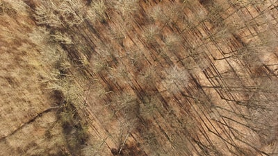 aerial view of leafless trees