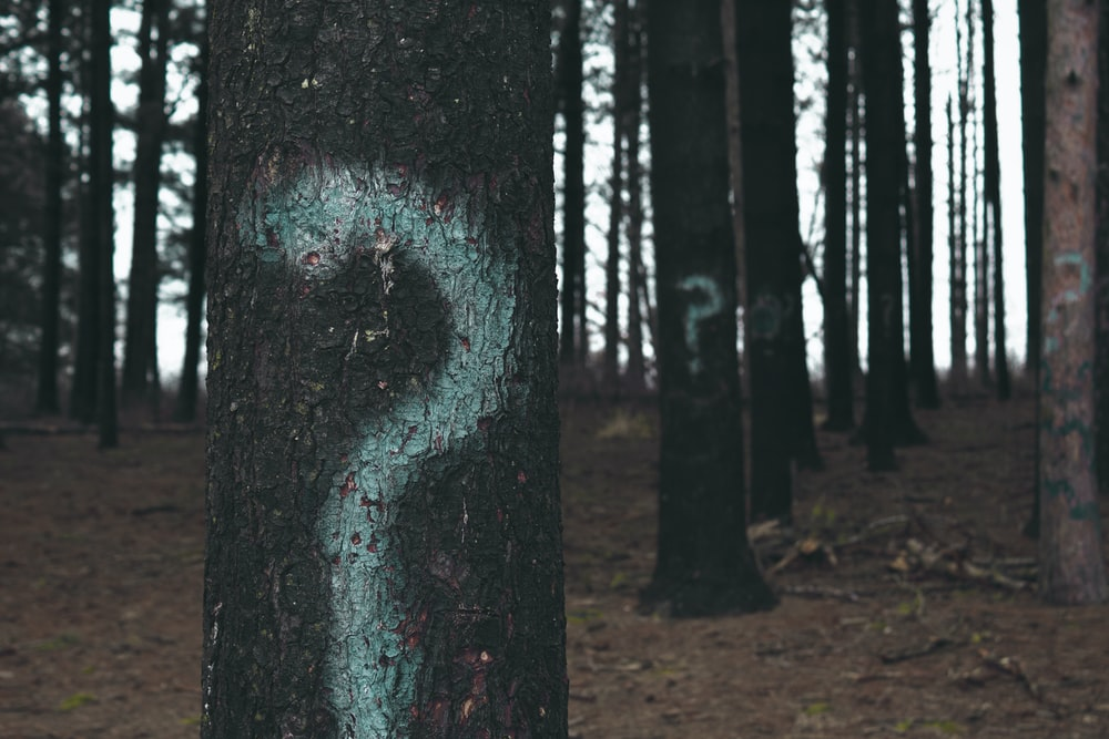 forest trees marked with question marks