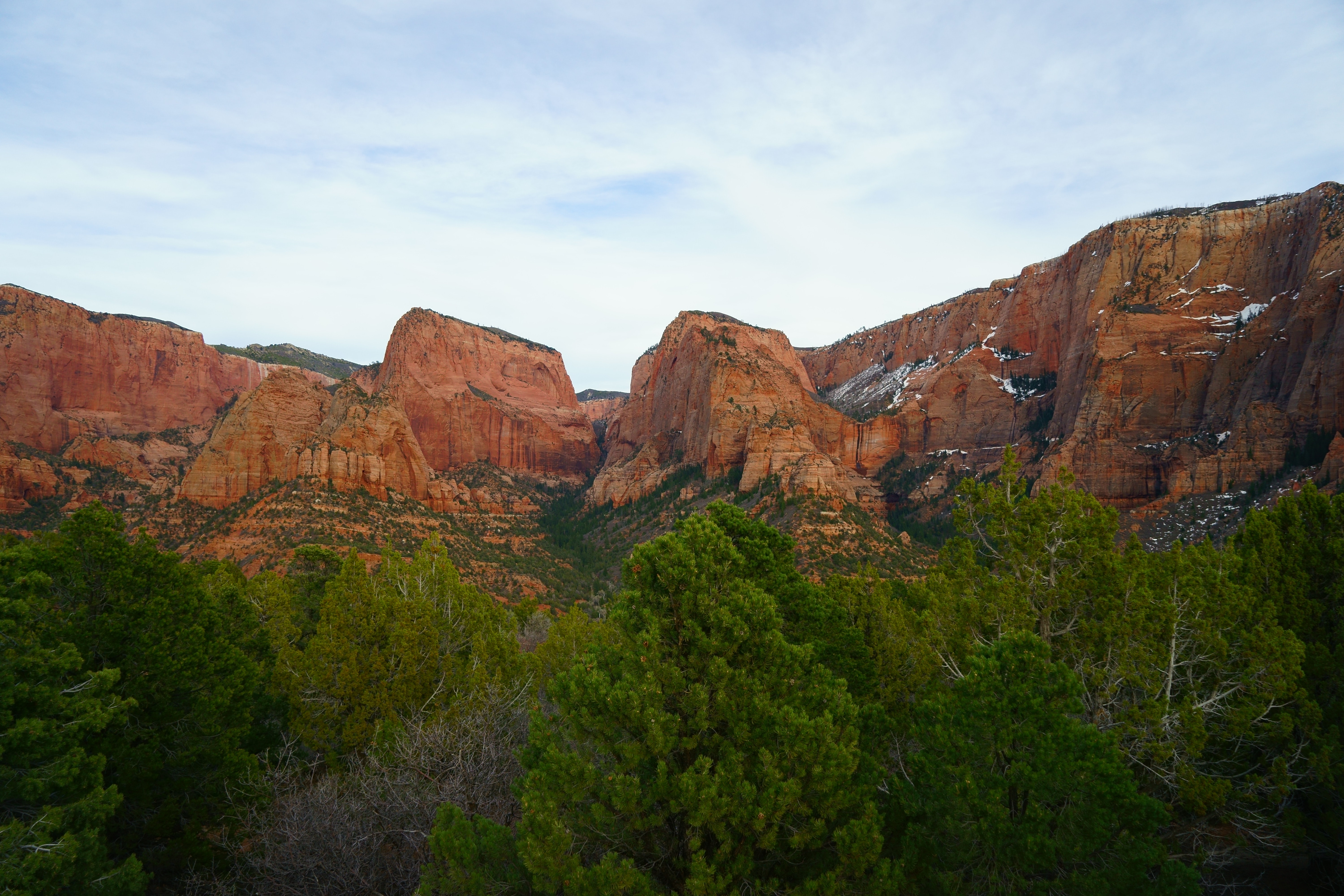 Green trees near red cliffs in Kolob Canyons