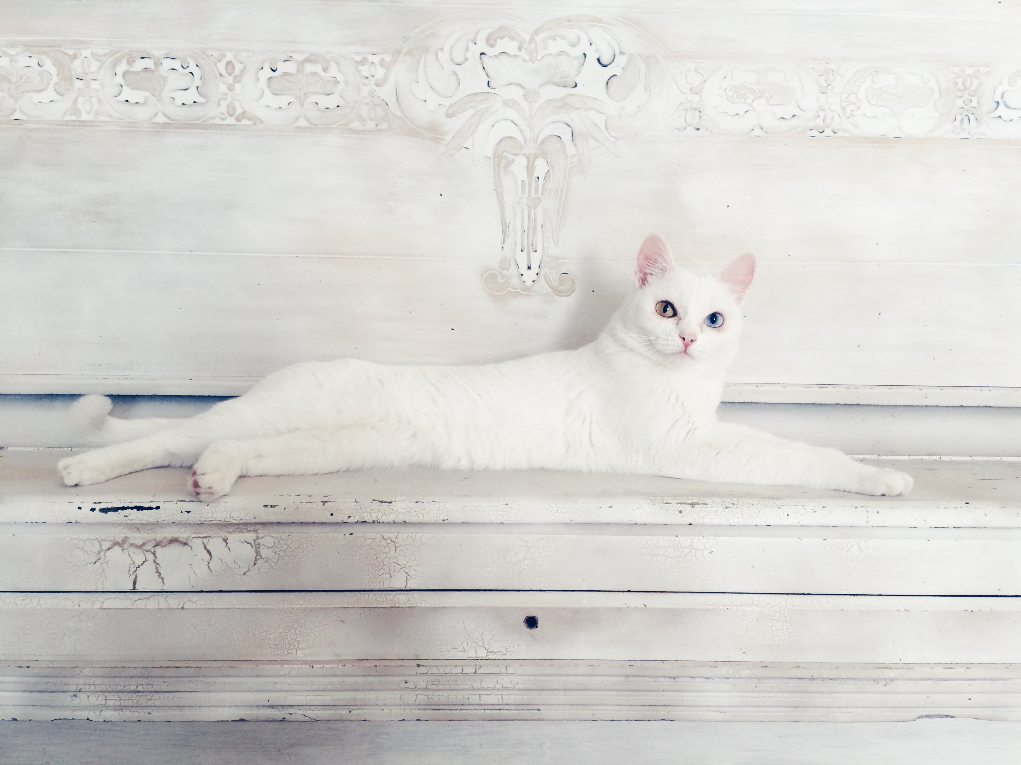 A white cat on a white wooden surface.