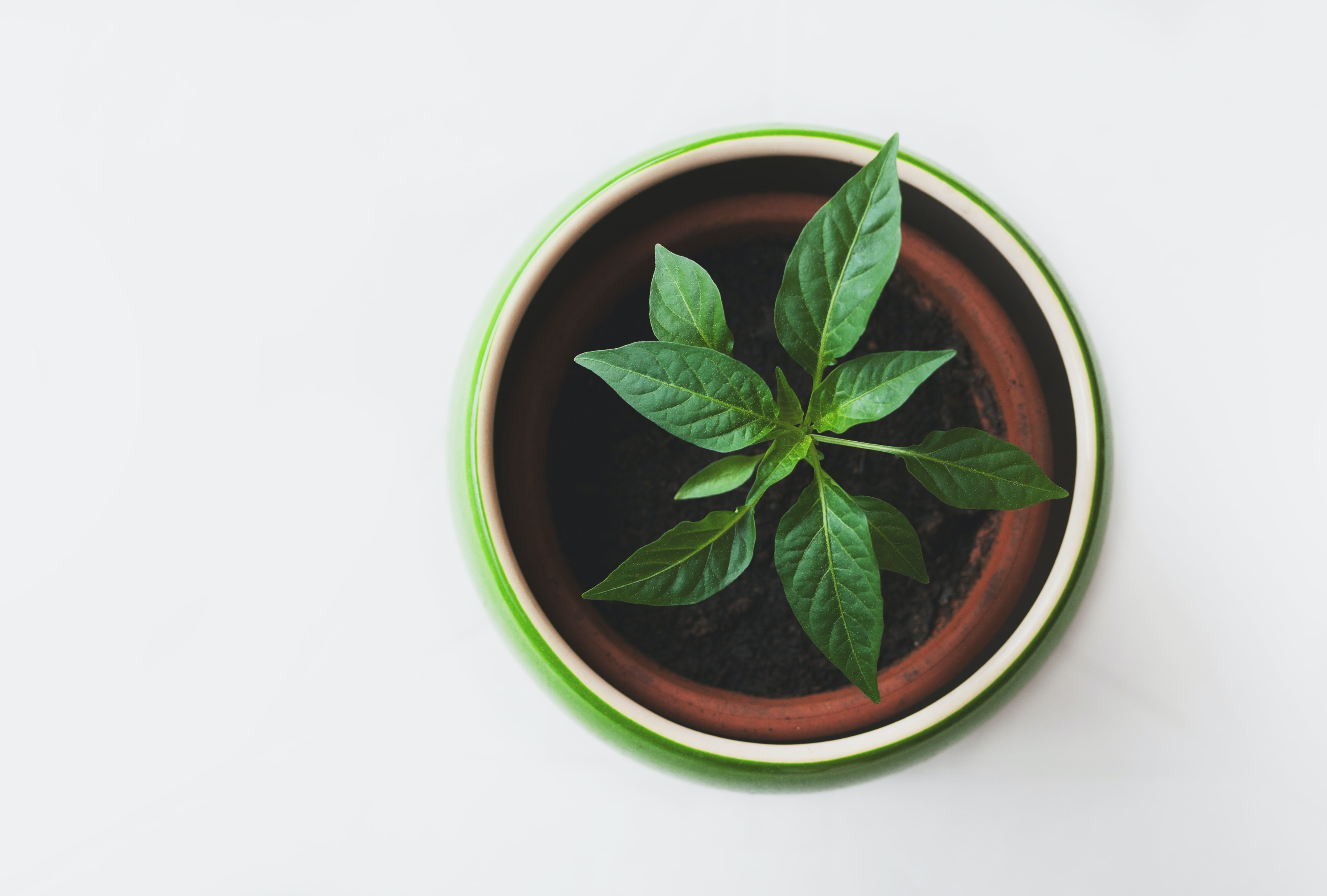 Overhead shot of a green potted plant on a white surface