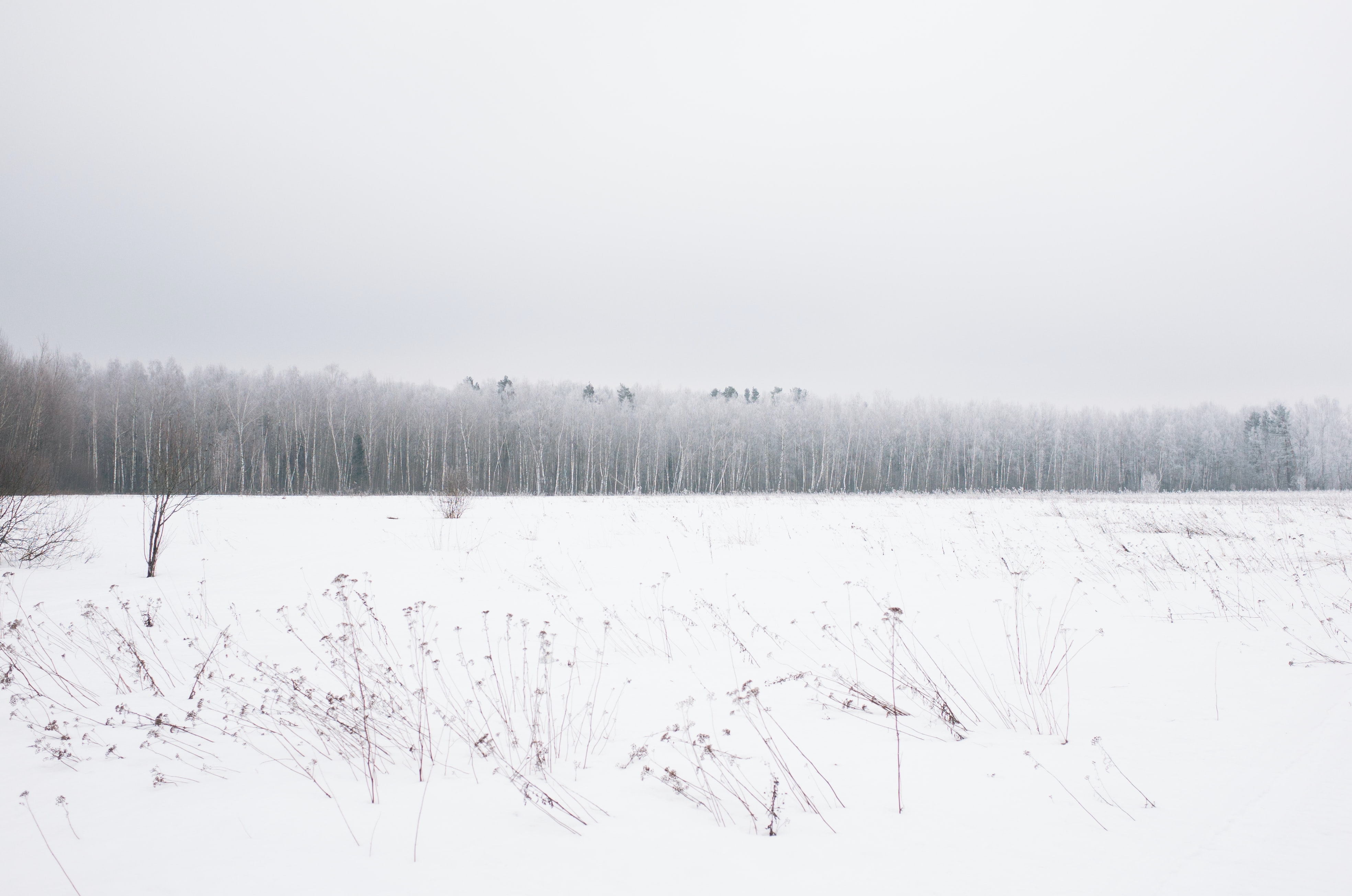 Snowy open land with rows of trees in Russia