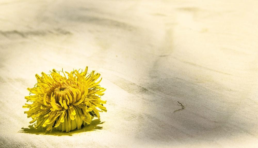 yellow flower on white textile