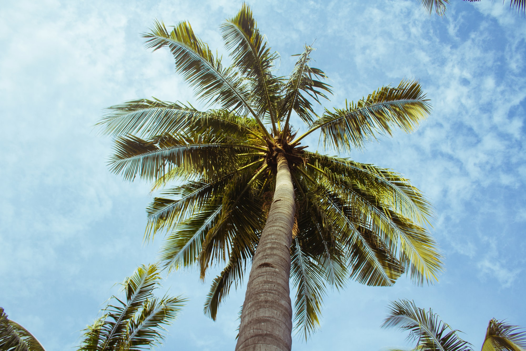 Palm Trees Could be Used for Next-generation Graphene Supercapacitors