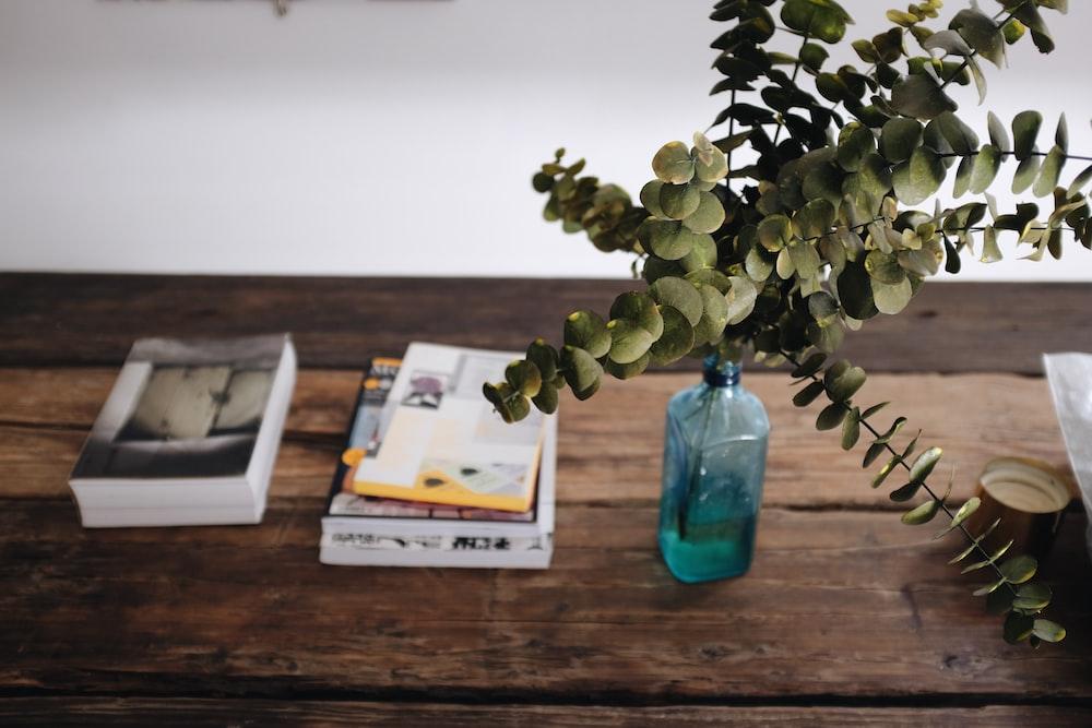 green leafed plant on blue glass bottle