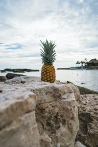 yellow pineapple on gray rock near body of water at daytime