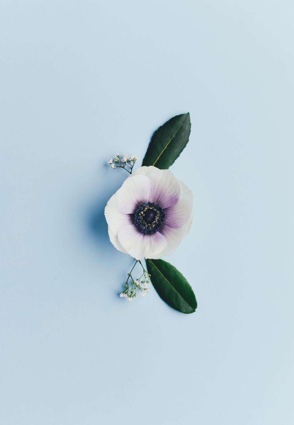 white-petaled flower
