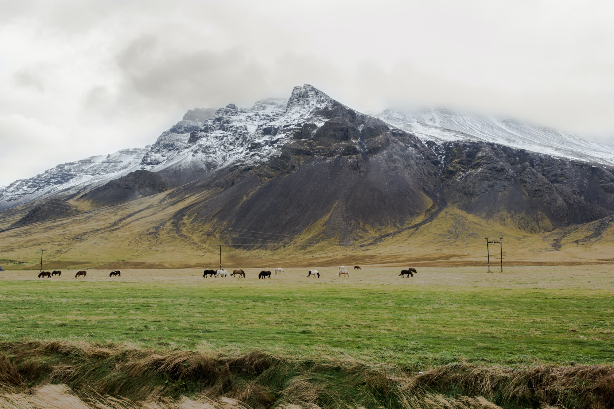 A herd of horses grazing at the foot of a steep snowy mountain