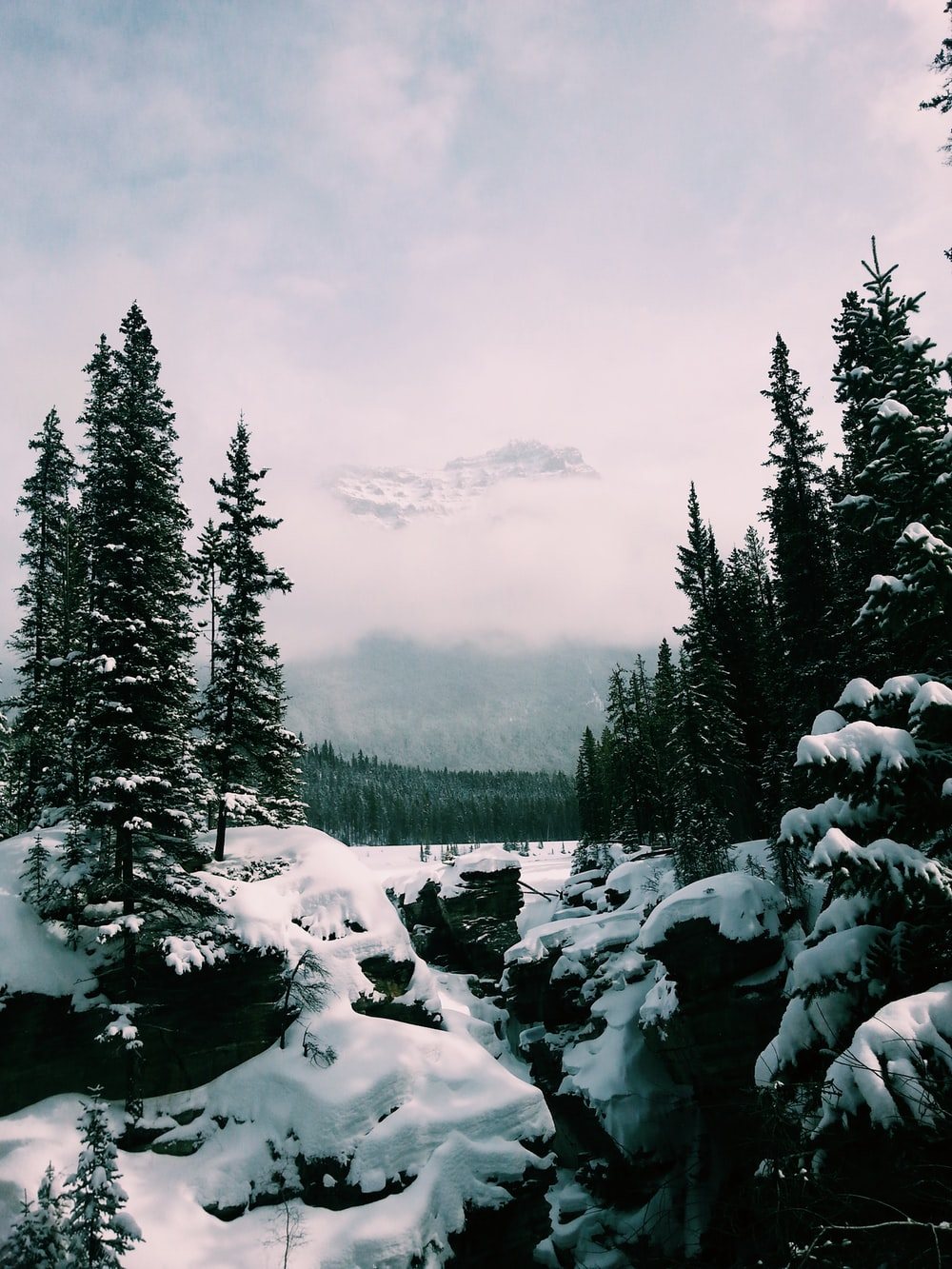 green pine trees and snow field