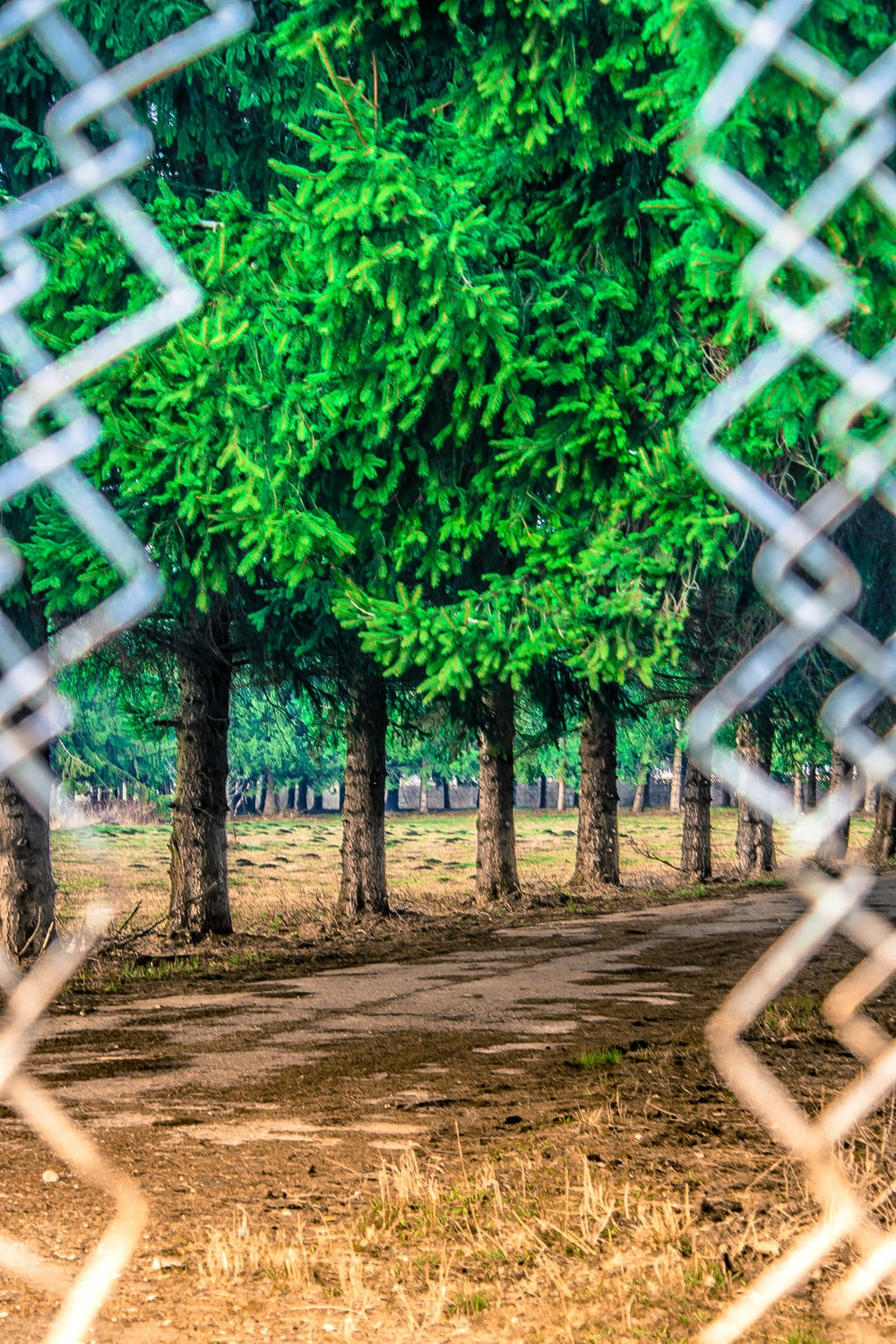 green trees beside gray chain link fence