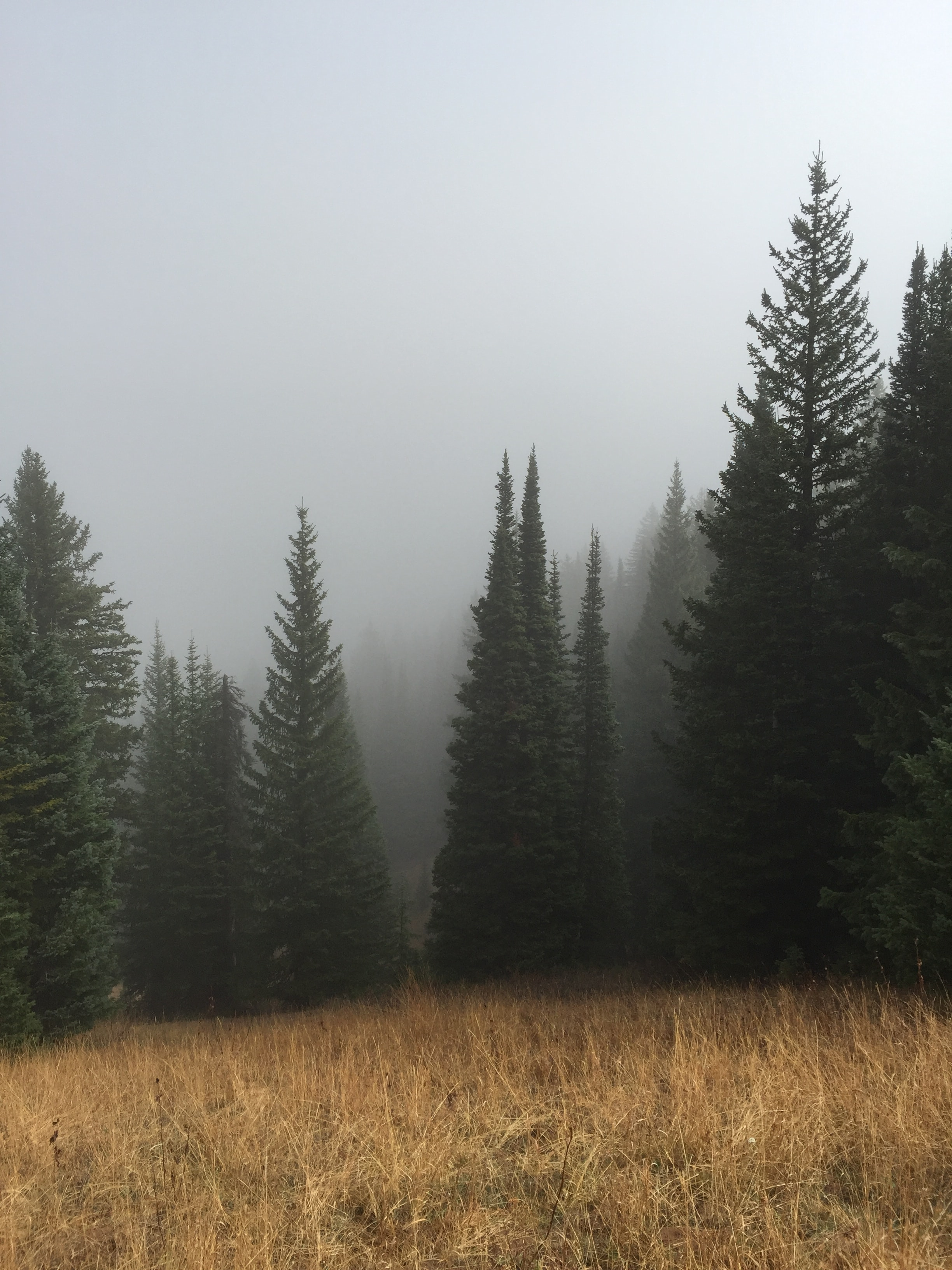 green pine trees below a cloudy sky