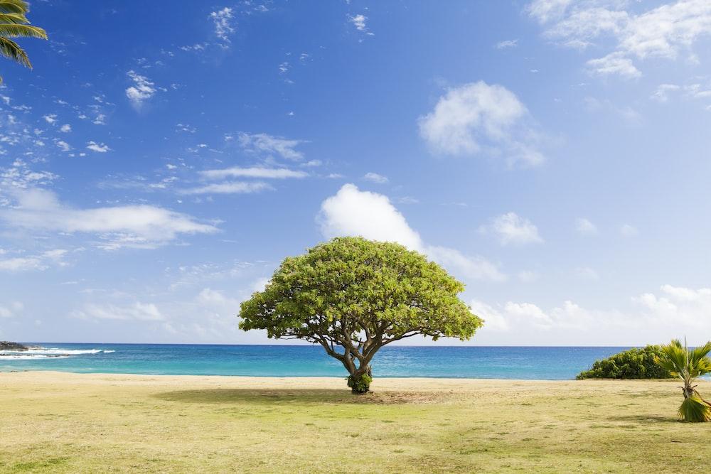 green leaf tree on shore
