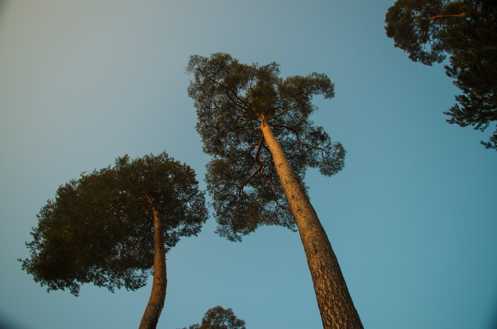 green and brown tree under blue sky during daytime