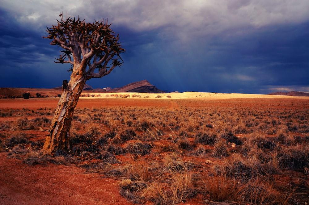 landscape photography of dessert