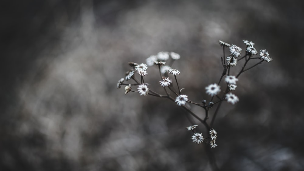 white flowers in macro shot