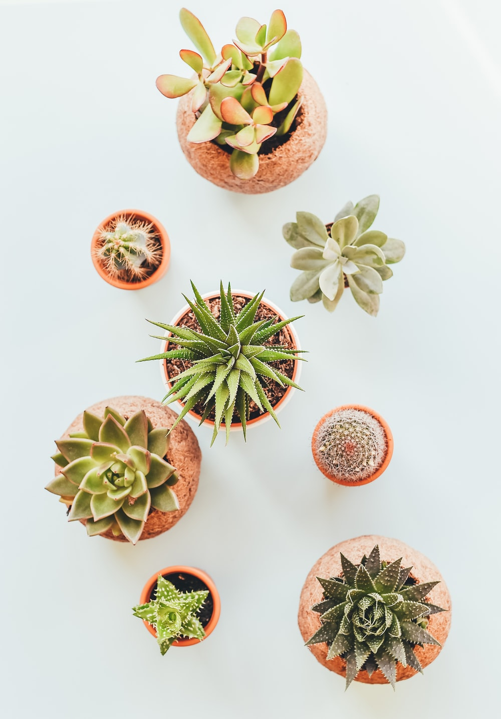 assorted succulents in clay pots