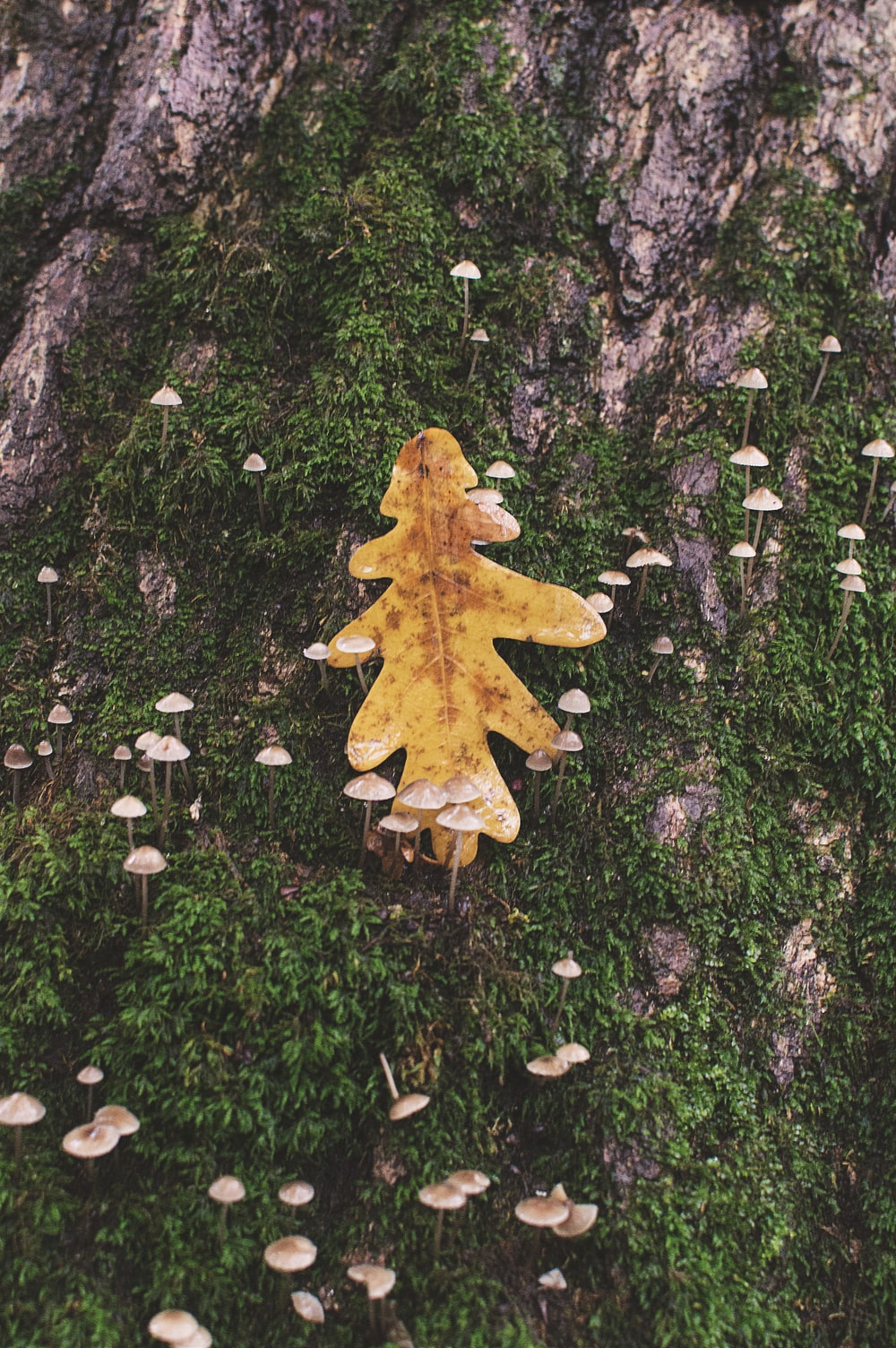brown tree trunk with brown leaf
