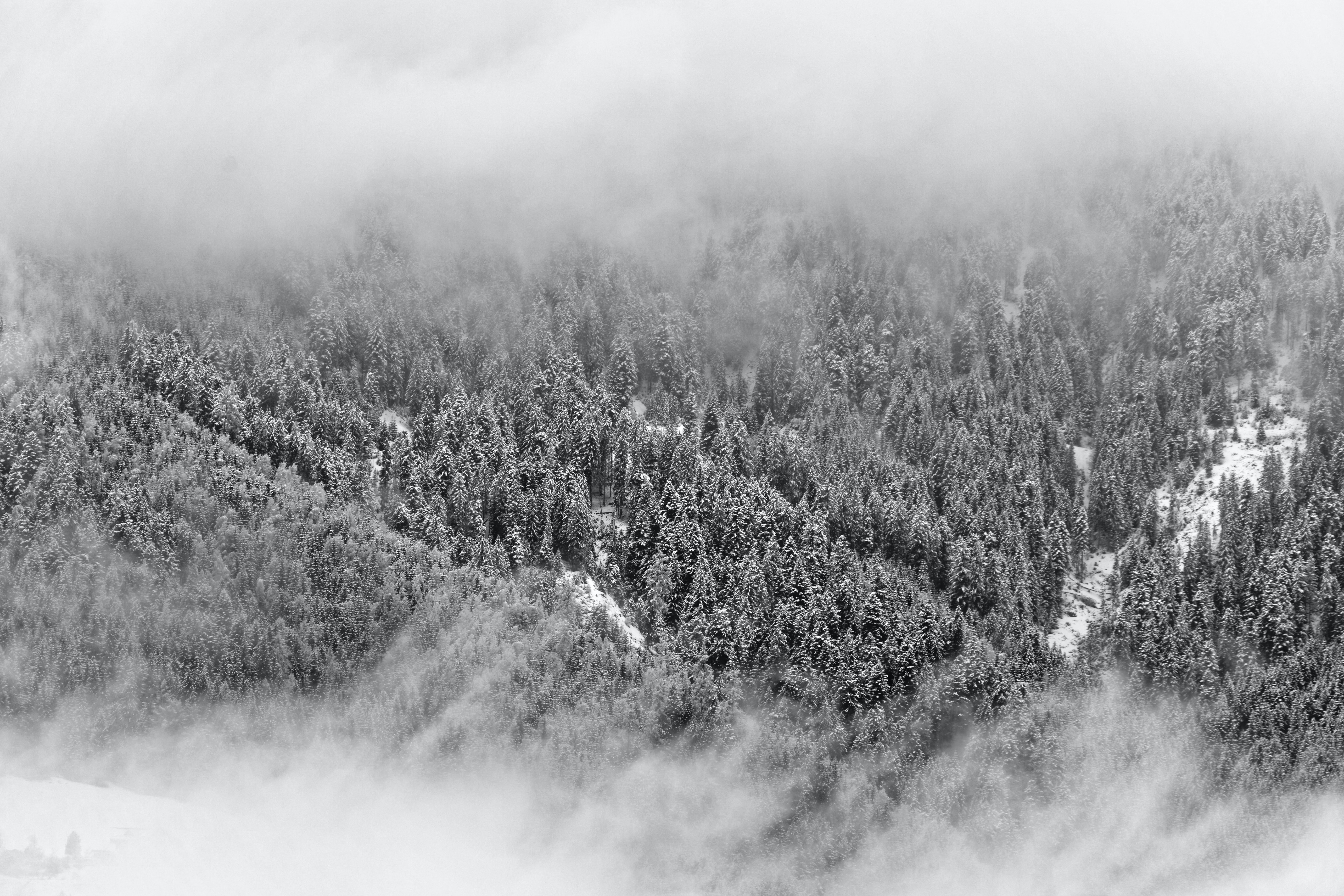 gray scale photo of trees in bird's eye view