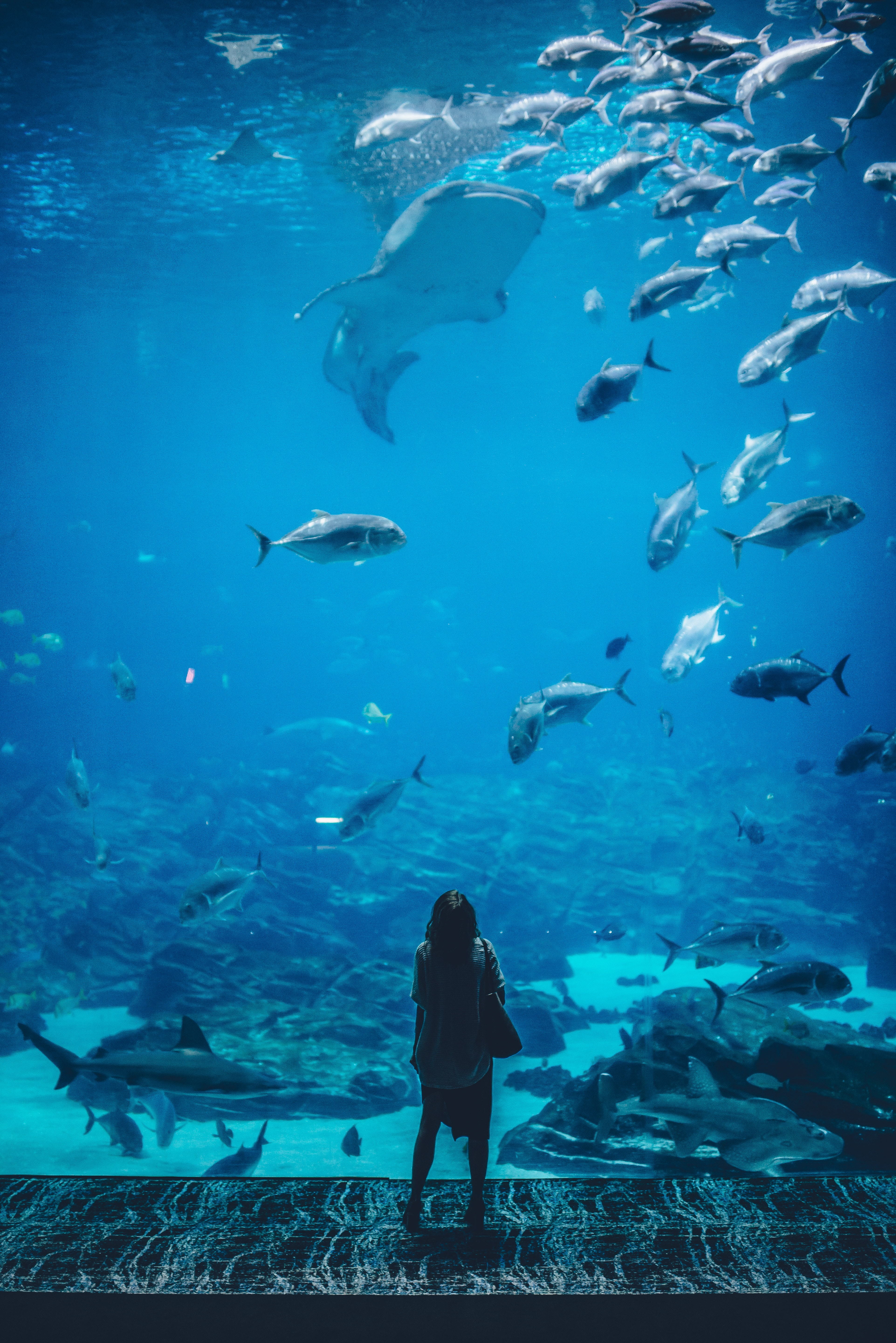 woman standing infront of aquarium with shoal of fish