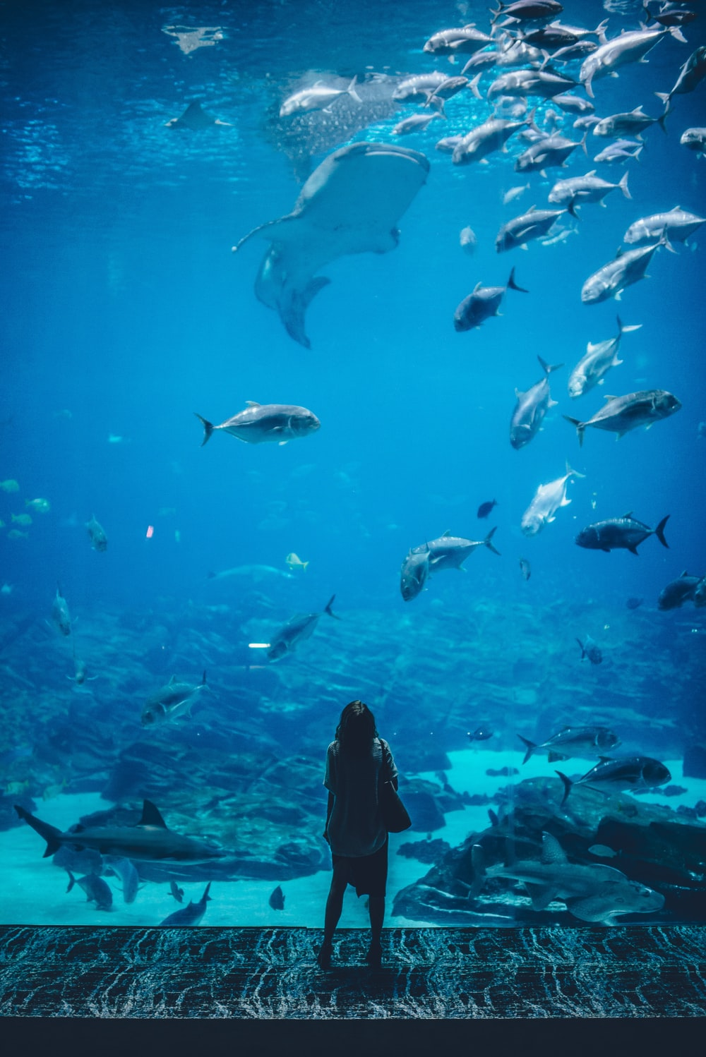 Person staring at fish at an aquarium.