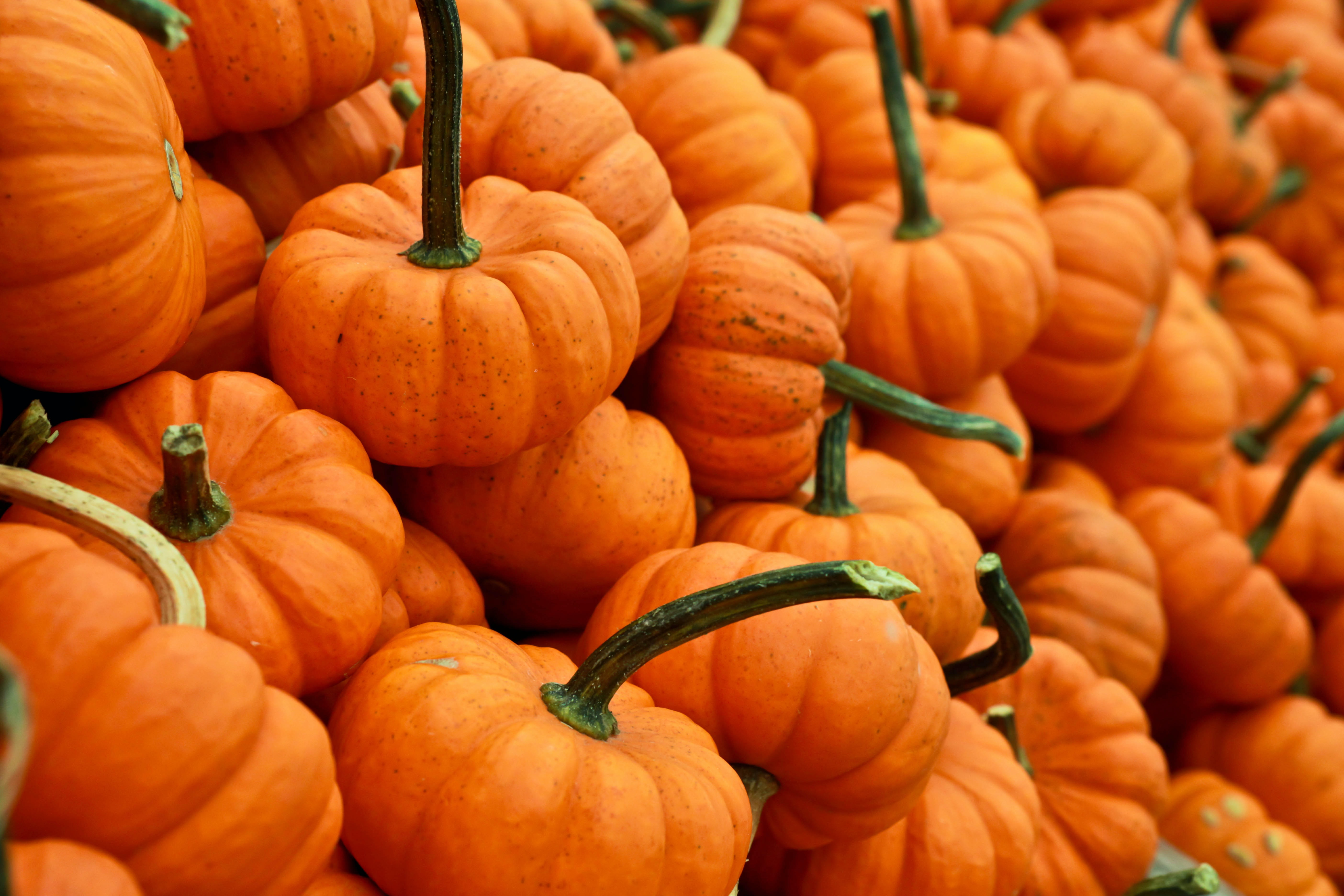 Stack of small orange pumpkins and gourds at an autumn market