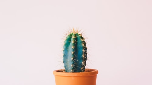 Growing Pain or Sitting On A Cactus