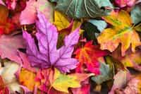 A Beautiful Season love blooms stories