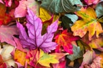 flat lay photography of purple and red leaves