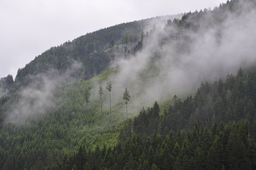 green leafed trees on mountains during fogs