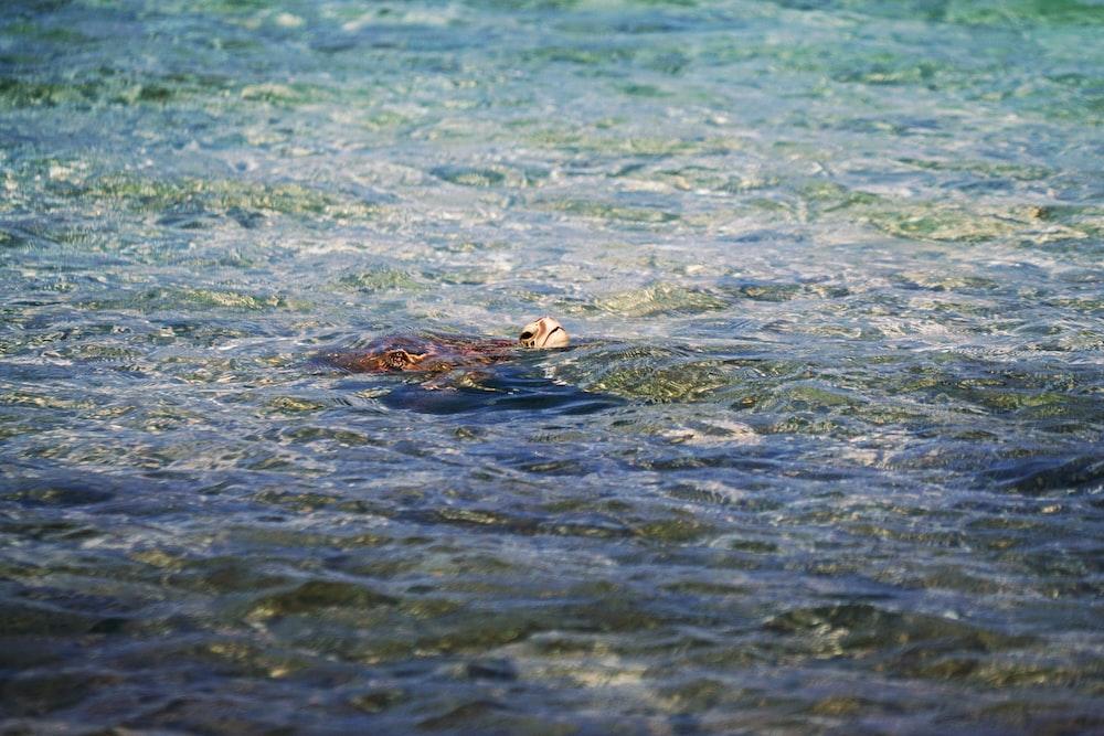 animal swimming on water