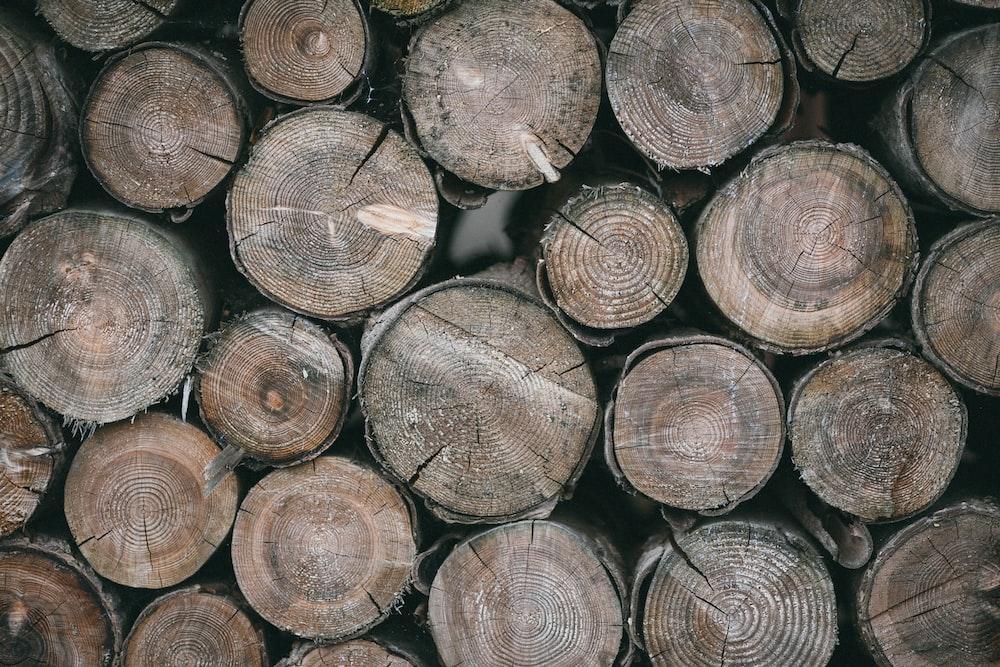 brown wood logs