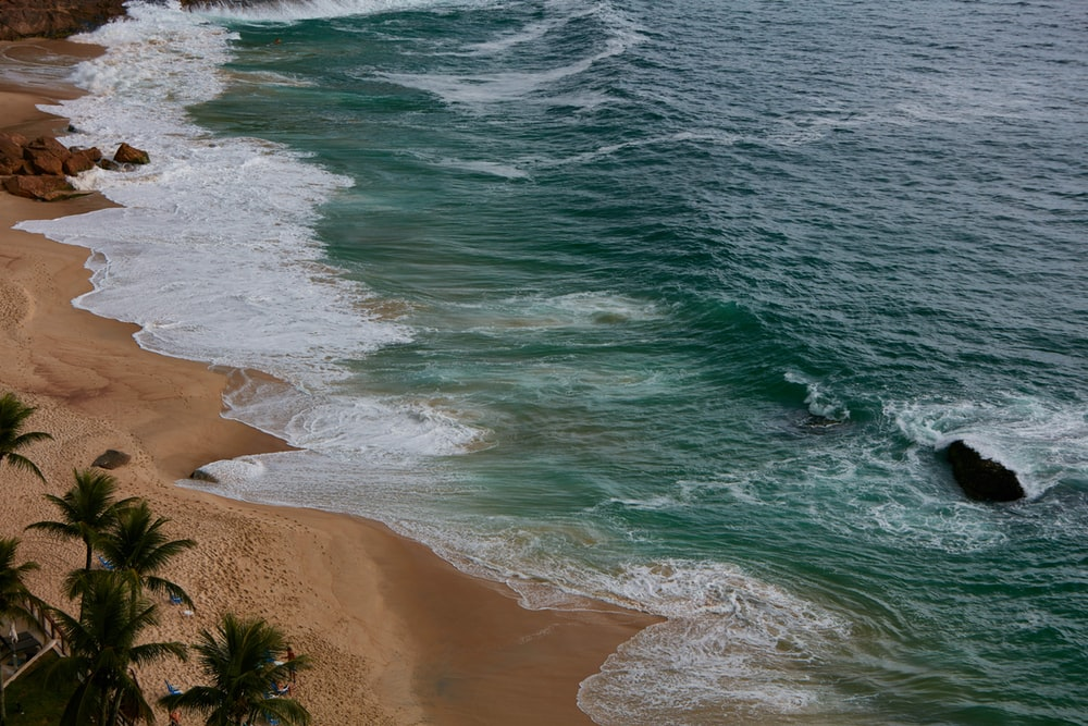 ocean waves near palm trees