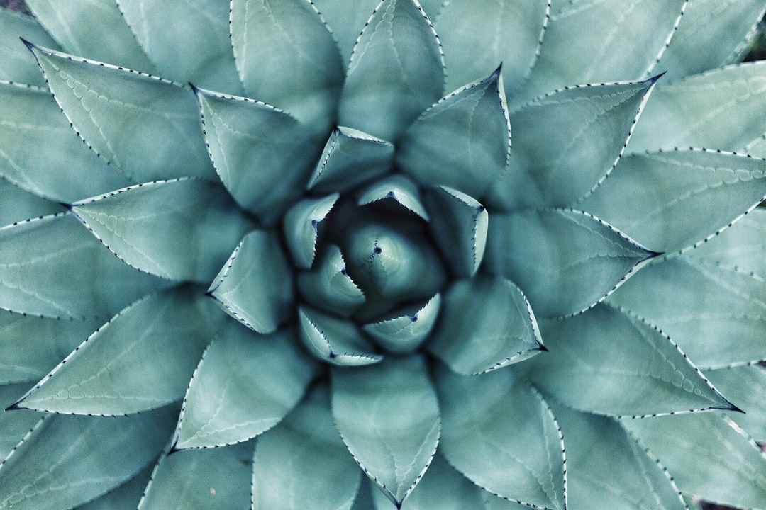 Succulent center in macro