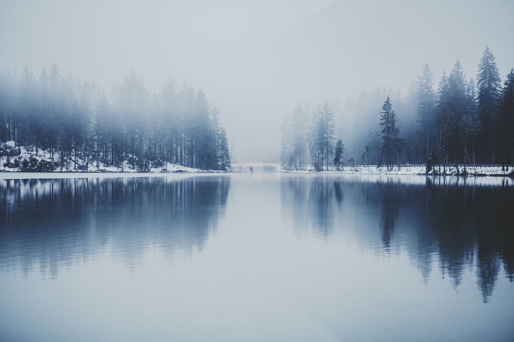 pine trees near water with fog