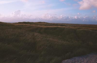 green open field under white clouds denmark zoom background