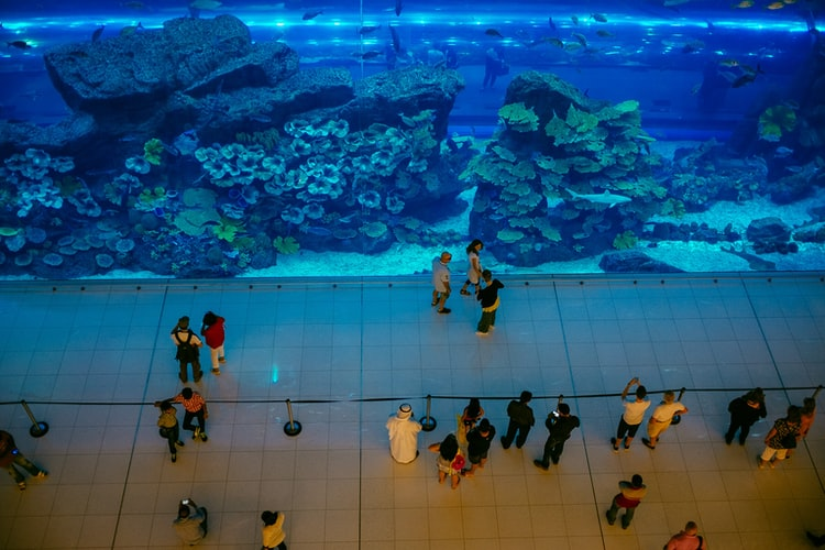 The inside view of Dubai Underwater aquarium