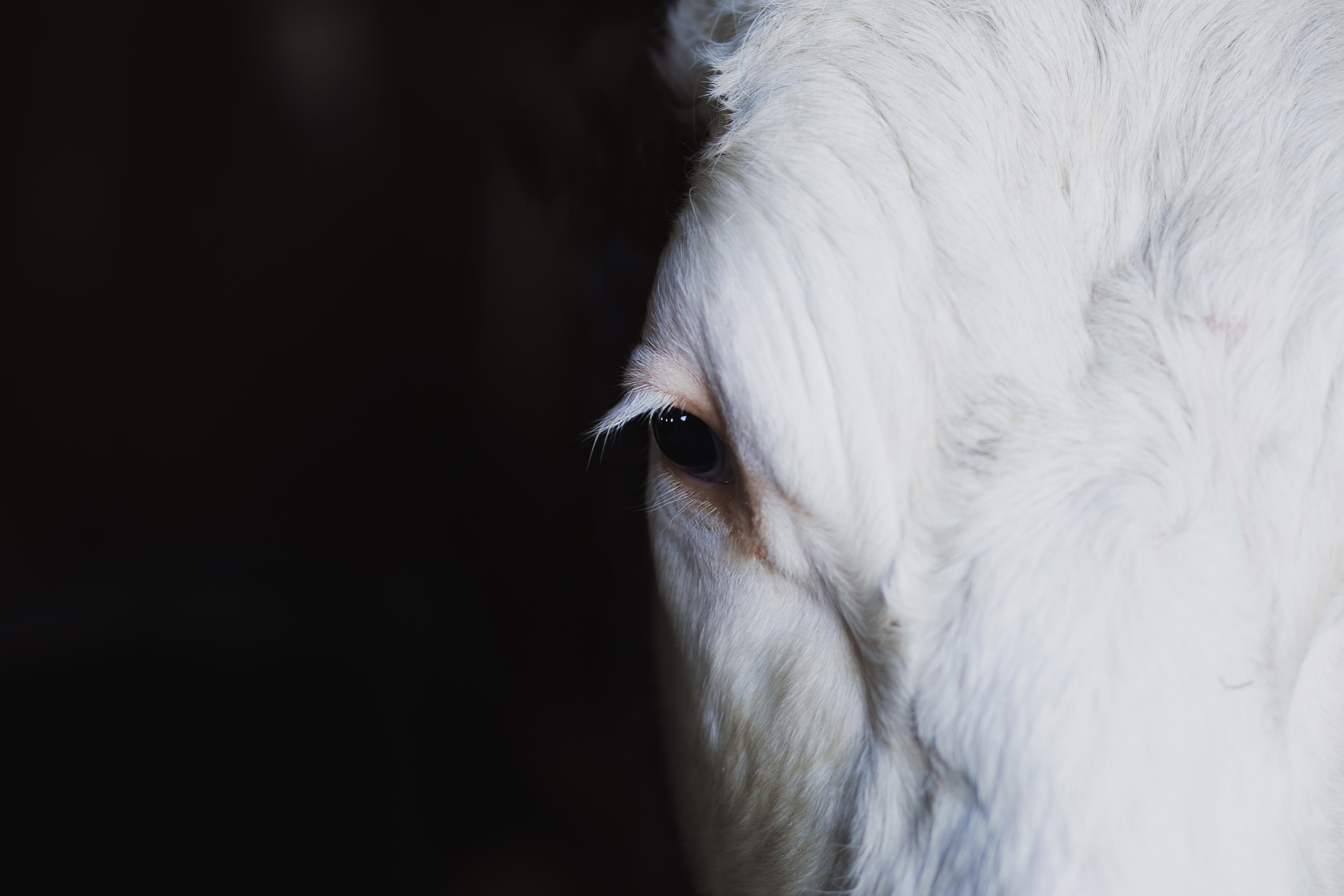 close-up photograph of white animal