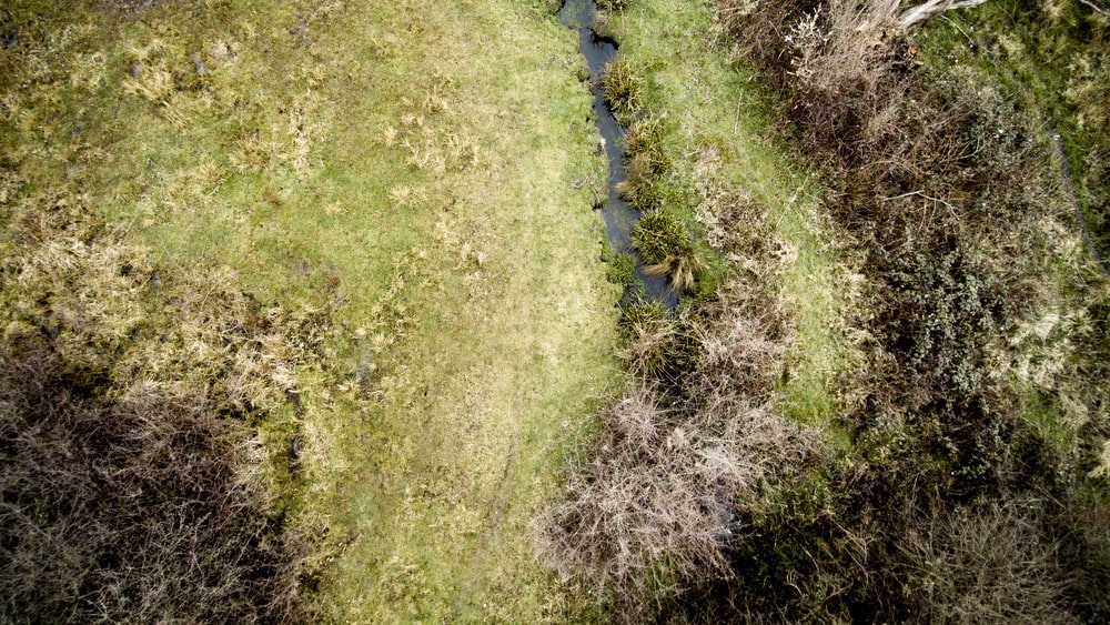 top view photography of grass field
