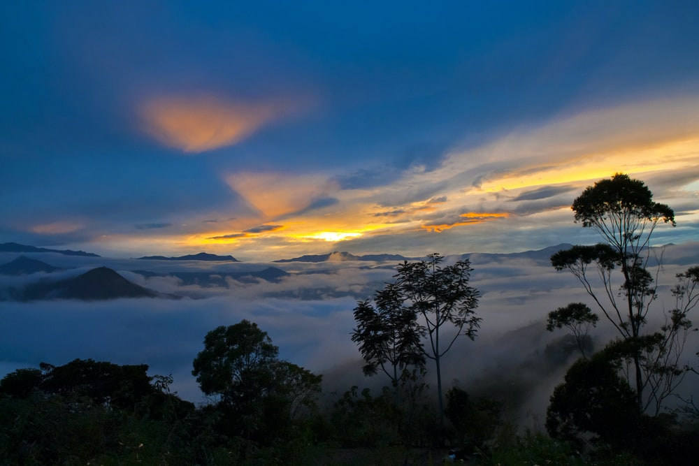 fog covered forest at sunrise