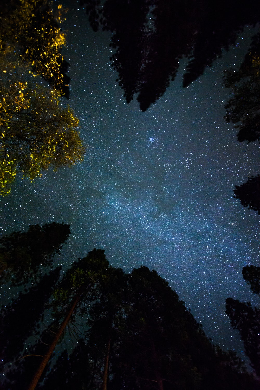 bottom view shot of trees under starry sky
