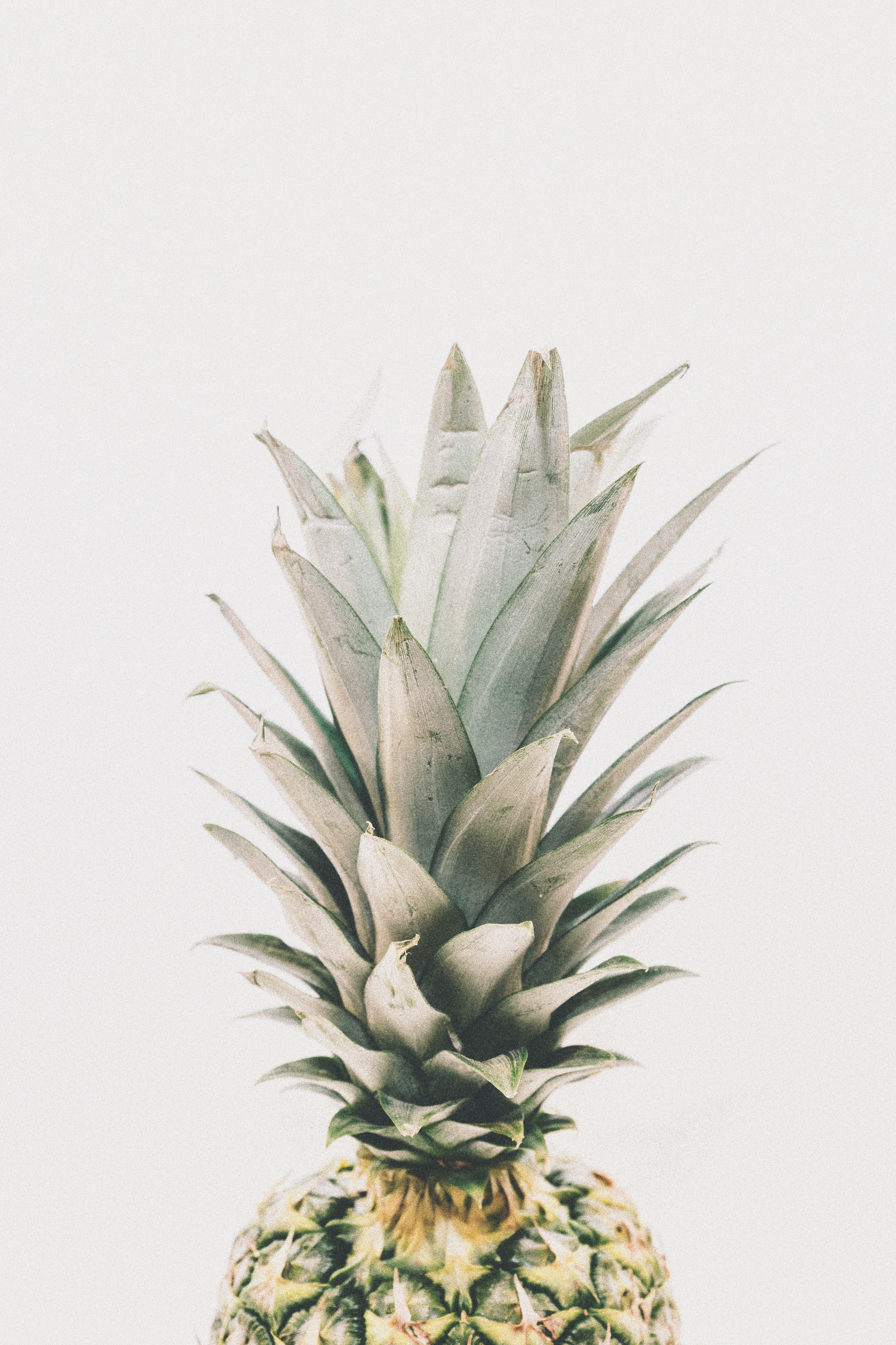 The top of a pineapple.