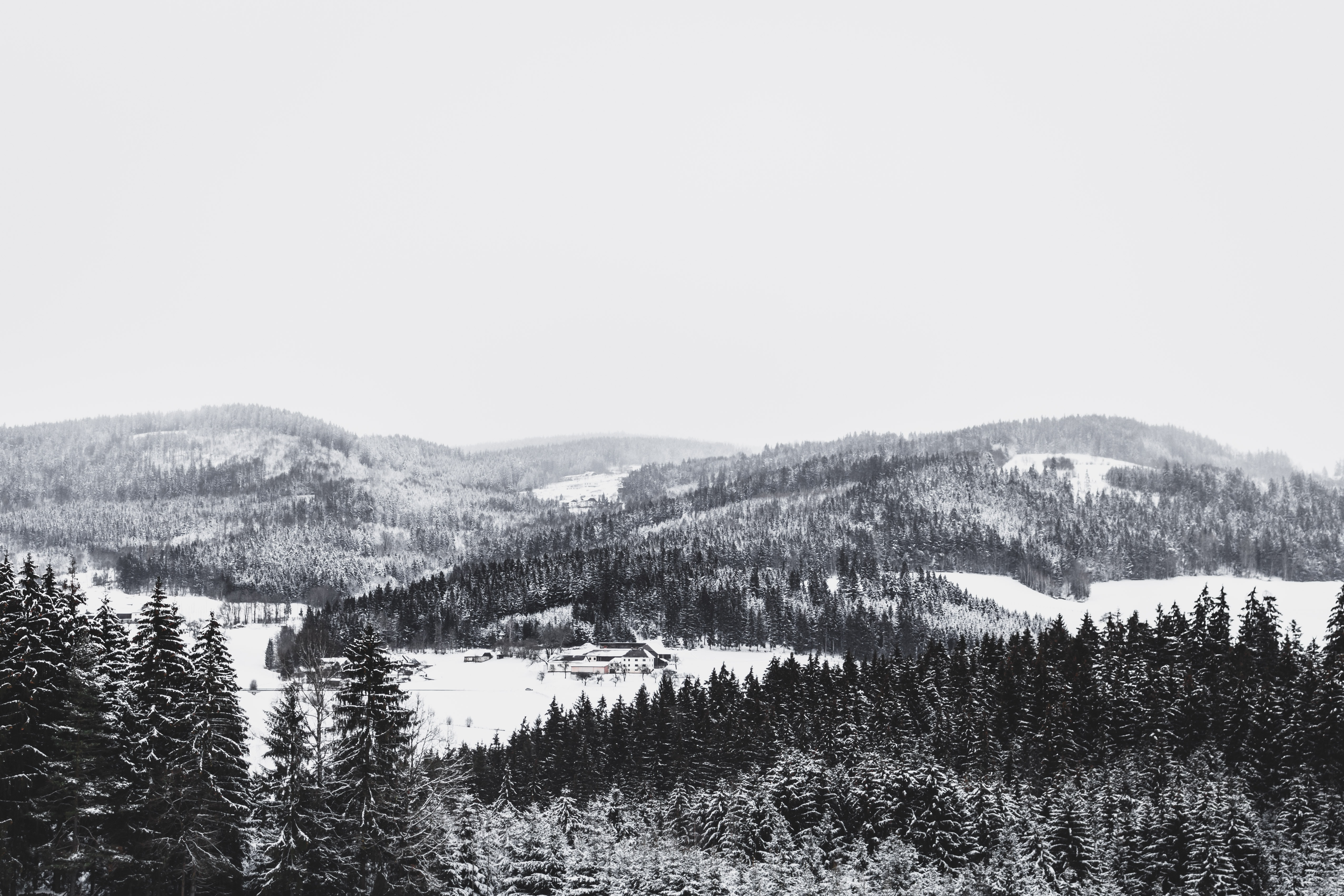 Dense forest trees in the snow with a mountains done in black and white