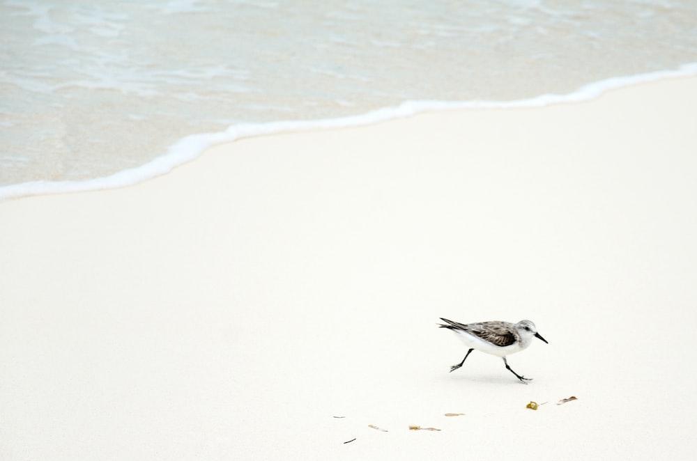 black and white bird on seashore