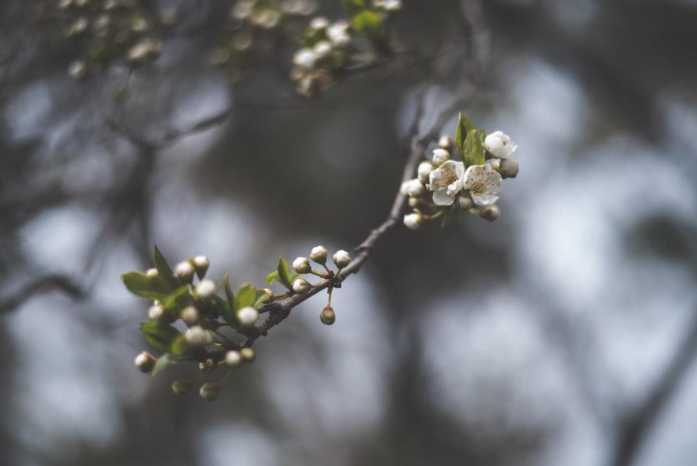 tilt shift lens photography of white flower