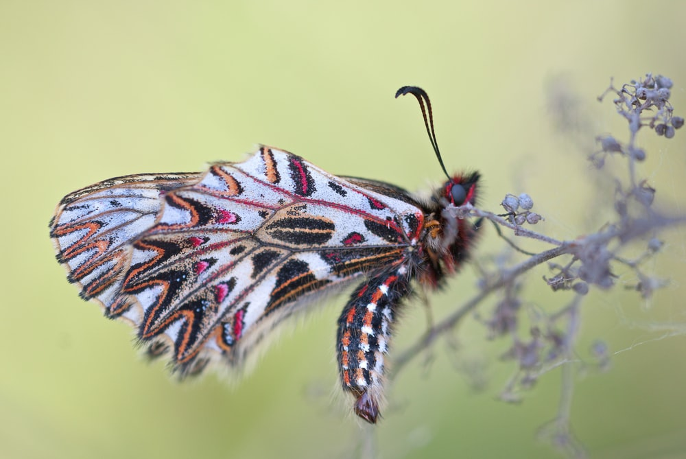 macro photography of multicolored moth