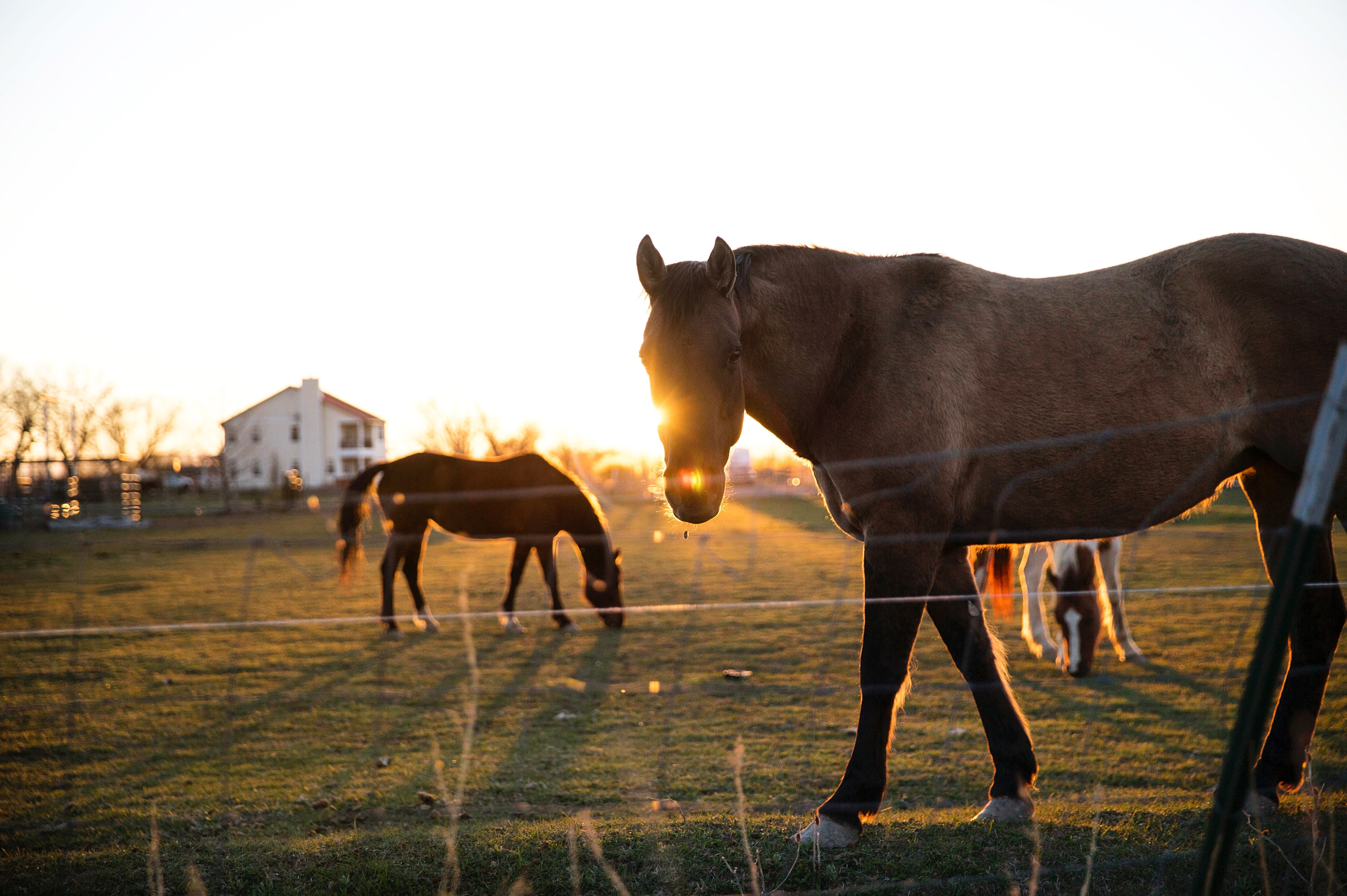 Horses in an enclosure with a house and the setting sun at the back