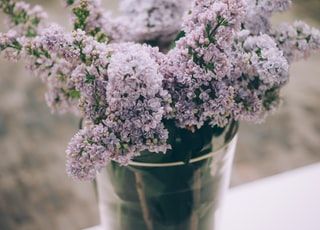 purple cluster flowers on clear glass vase