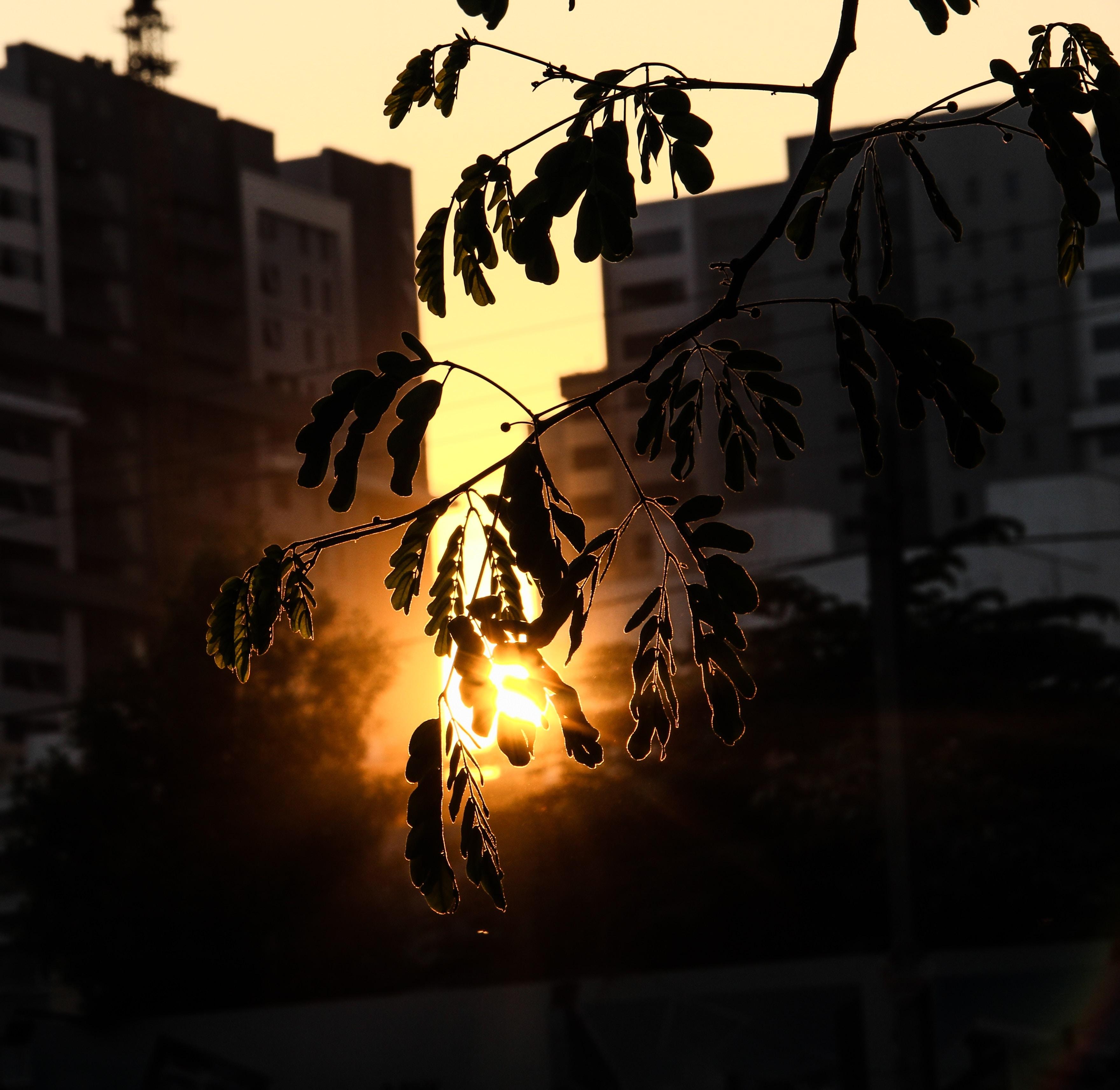 Free Unsplash photo from Rohan Kumar V.G.